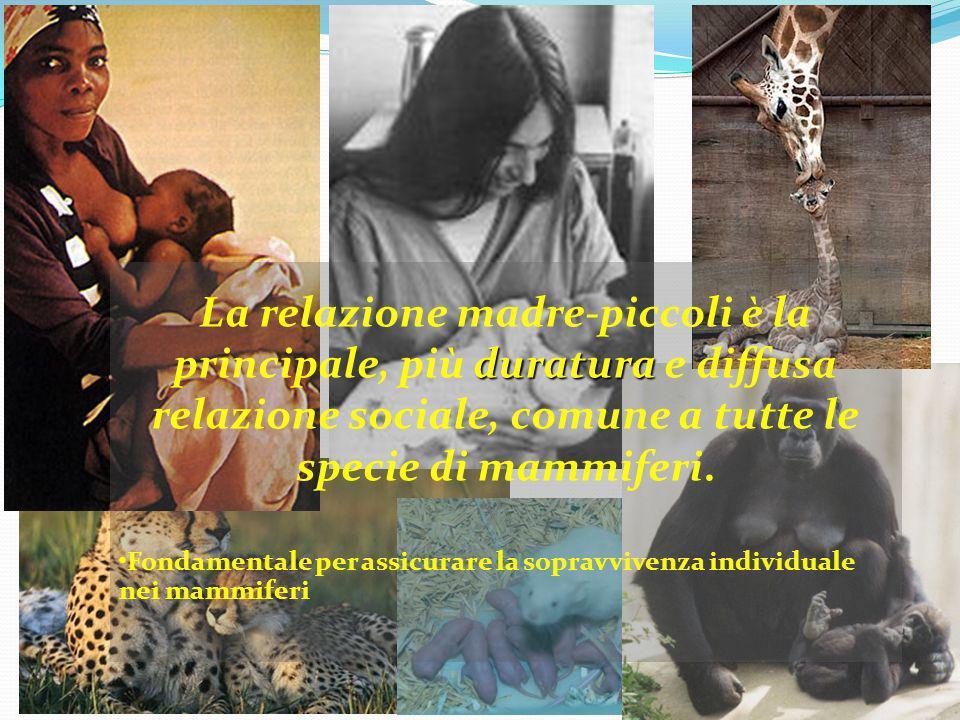 La relazione madre-piccoli è la principale, più duratura e diffusa relazione sociale, comune a tutte le specie di mammiferi.
