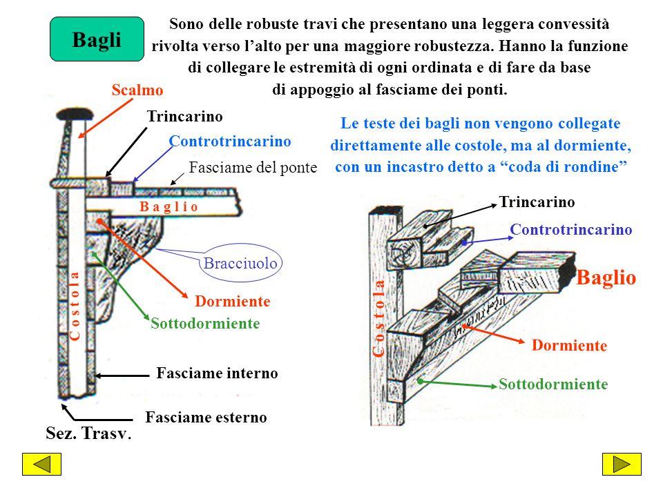 Bagli Sono delle robuste travi che presentano una leggera convessità. rivolta verso l'alto per una maggiore robustezza. Hanno la funzione.