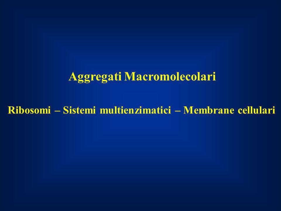 Aggregati Macromolecolari