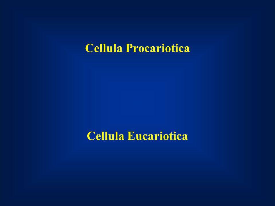 Cellula Procariotica Cellula Eucariotica