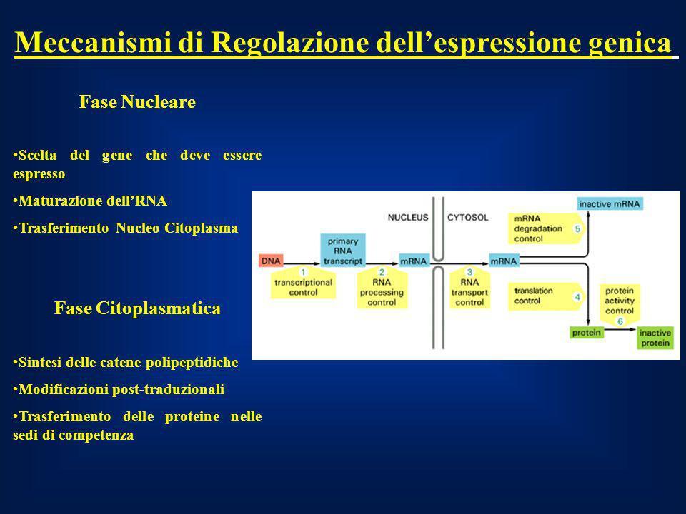 Meccanismi di Regolazione dell'espressione genica