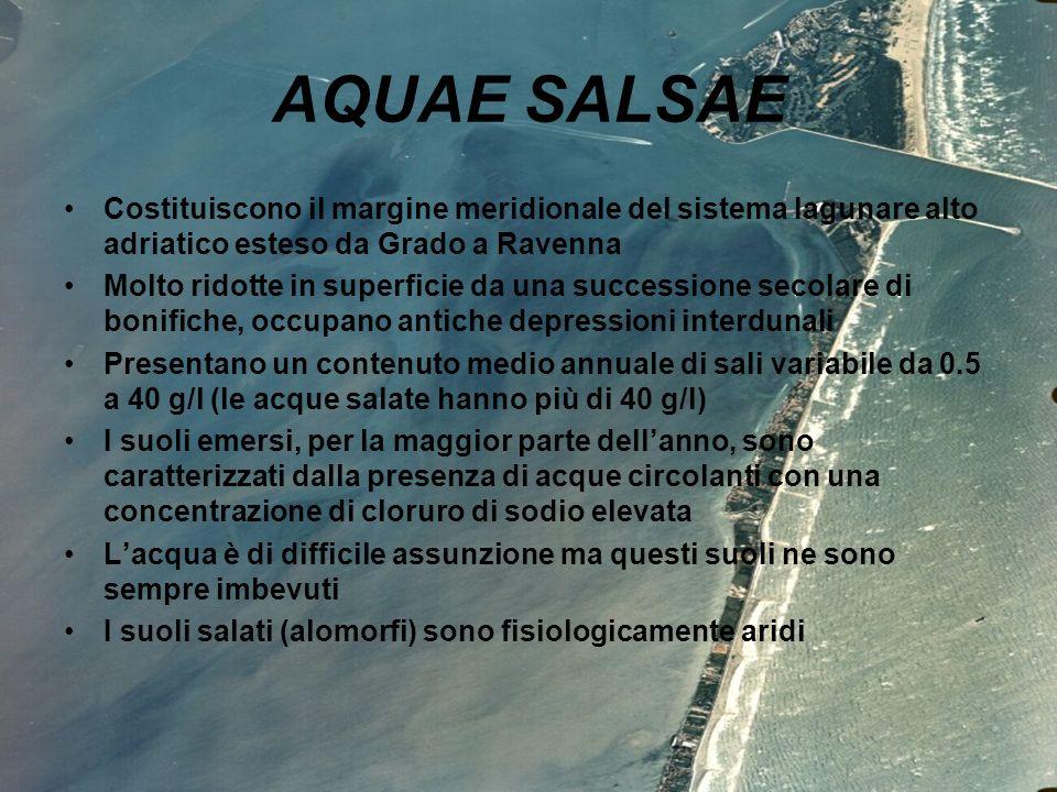 AQUAE SALSAE Costituiscono il margine meridionale del sistema lagunare alto adriatico esteso da Grado a Ravenna.