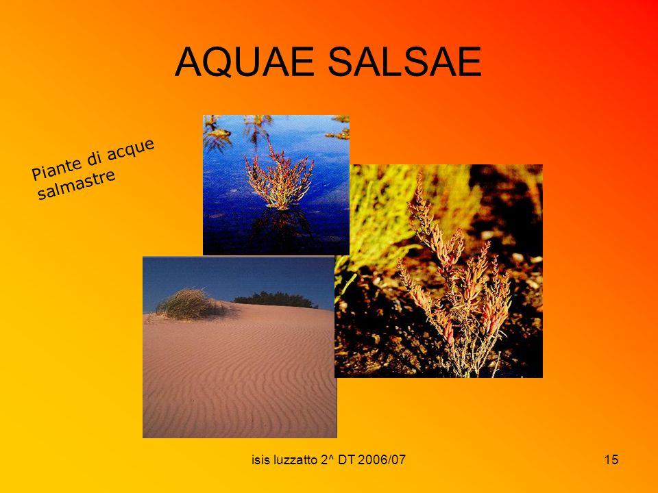 AQUAE SALSAE Piante di acque salmastre isis luzzatto 2^ DT 2006/07