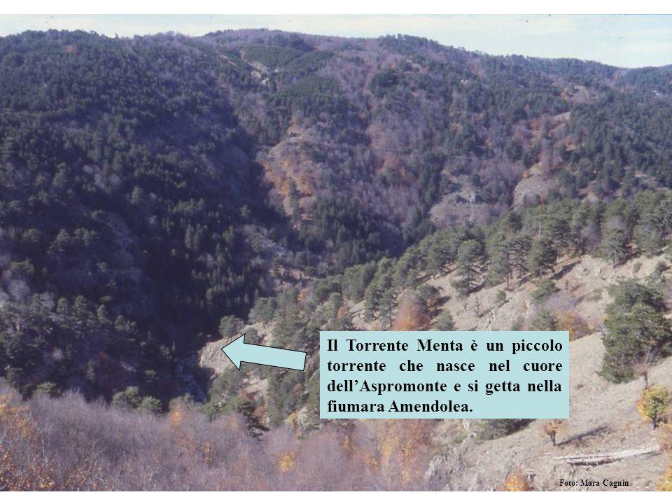 Il Torrente Menta è un piccolo torrente che nasce nel cuore dell'Aspromonte e si getta nella fiumara Amendolea.