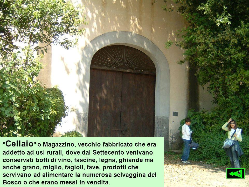 Cellaio o Magazzino, vecchio fabbricato che era addetto ad usi rurali, dove dal Settecento venivano conservati botti di vino, fascine, legna, ghiande ma anche grano, miglio, fagioli, fave, prodotti che servivano ad alimentare la numerosa selvaggina del Bosco o che erano messi in vendita.