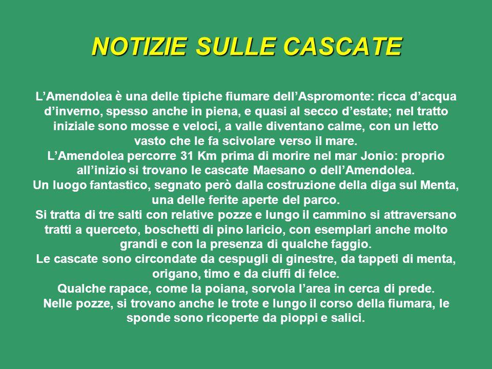 NOTIZIE SULLE CASCATE