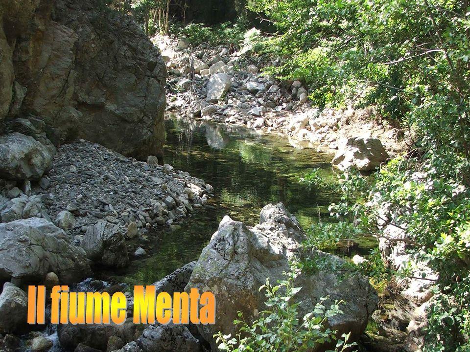 Il fiume Menta