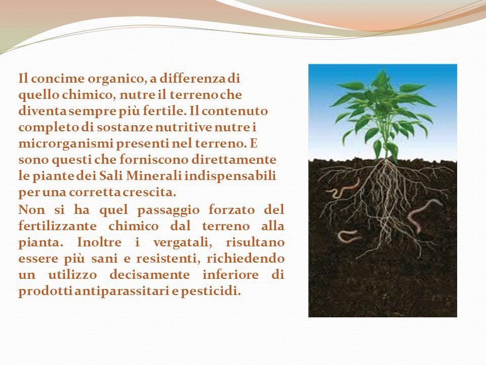 Il concime organico, a differenza di quello chimico, nutre il terreno che diventa sempre più fertile. Il contenuto completo di sostanze nutritive nutre i microrganismi presenti nel terreno. E sono questi che forniscono direttamente le piante dei Sali Minerali indispensabili per una corretta crescita.