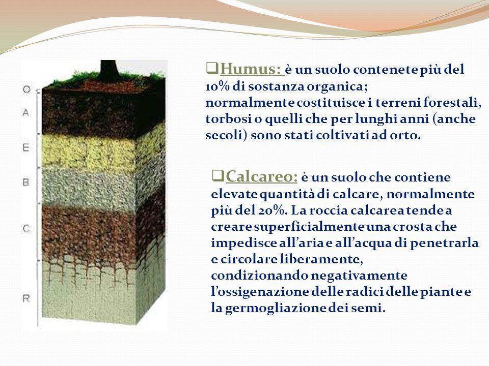 Humus: è un suolo contenete più del 10% di sostanza organica;