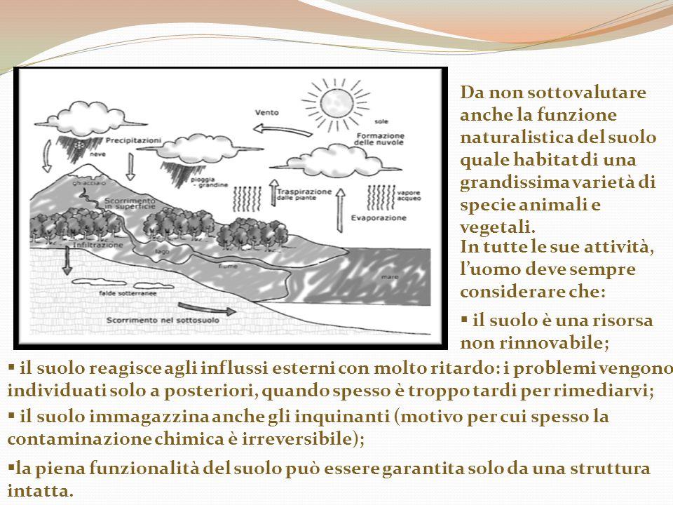 Da non sottovalutare anche la funzione naturalistica del suolo quale habitat di una