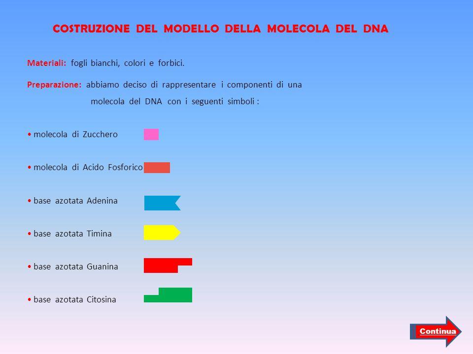 COSTRUZIONE DEL MODELLO DELLA MOLECOLA DEL DNA