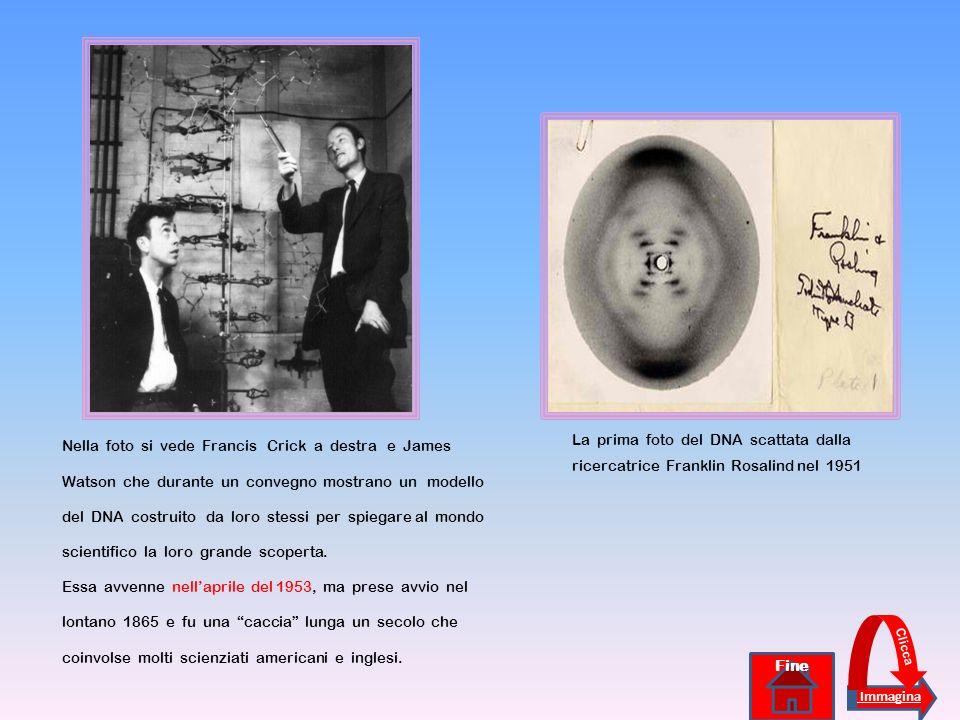 Nella foto si vede Francis Crick a destra e James