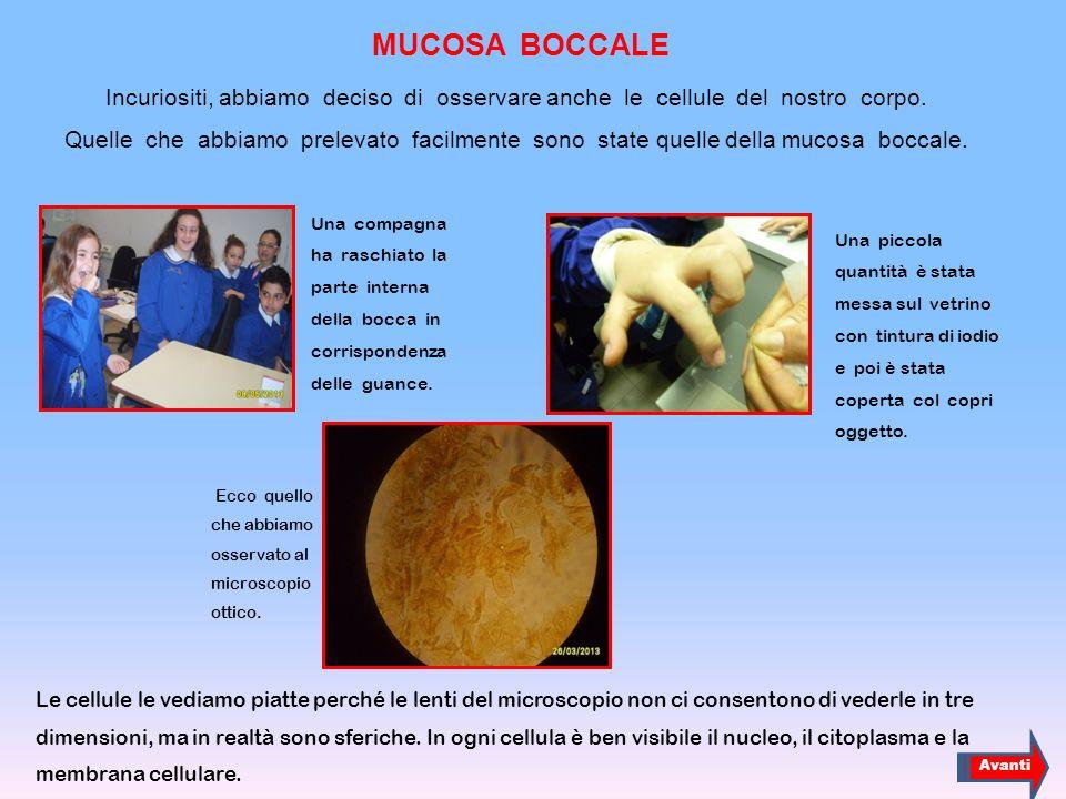MUCOSA BOCCALE
