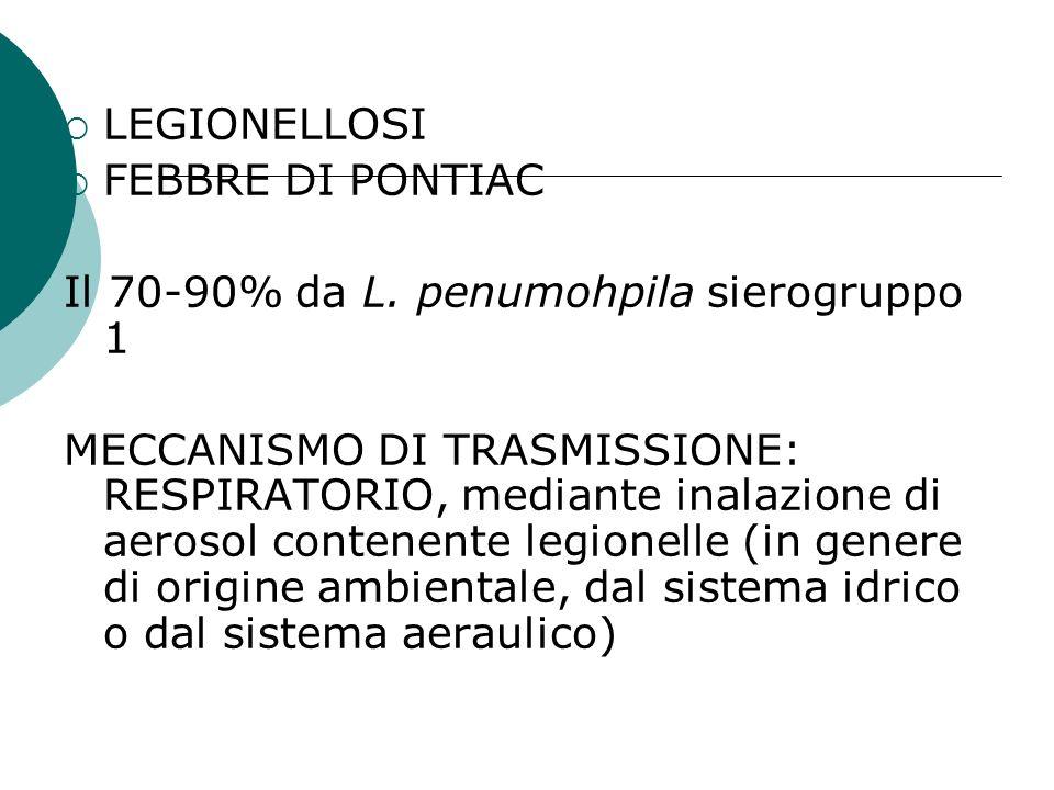 LEGIONELLOSI FEBBRE DI PONTIAC. Il 70-90% da L. penumohpila sierogruppo 1.