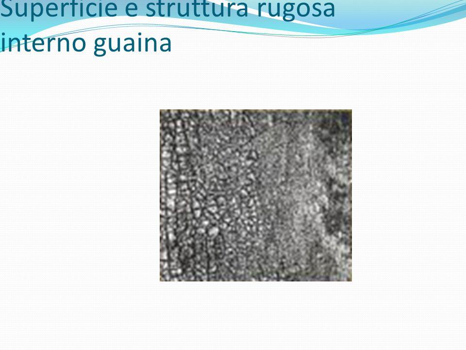Superficie e struttura rugosa interno guaina