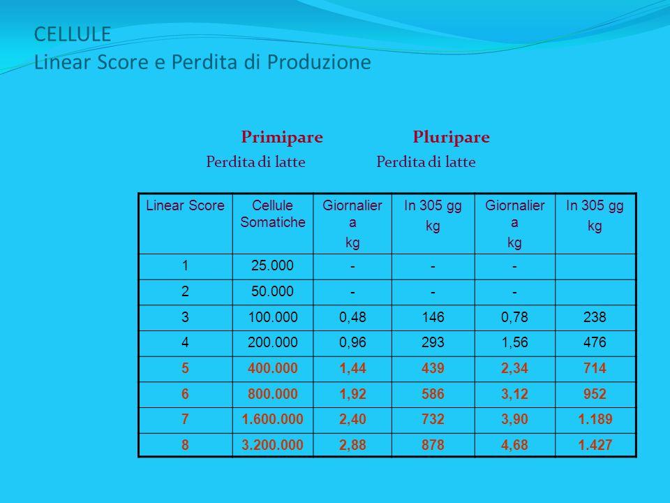 CELLULE Linear Score e Perdita di Produzione