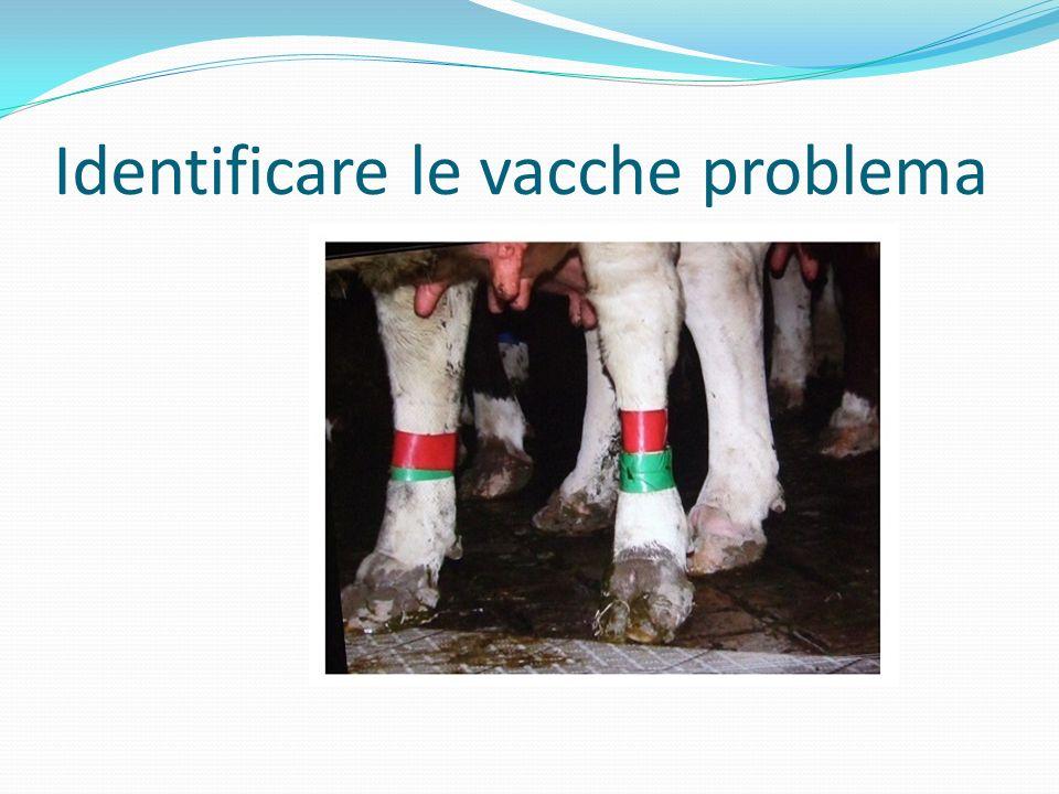 Identificare le vacche problema