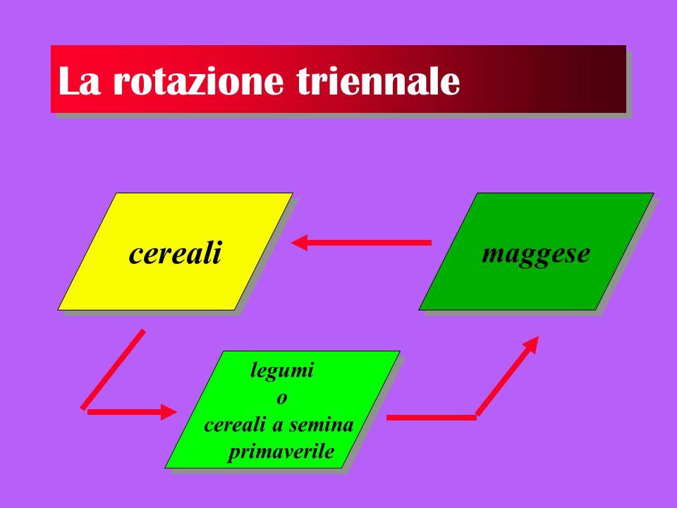 La rotazione triennale