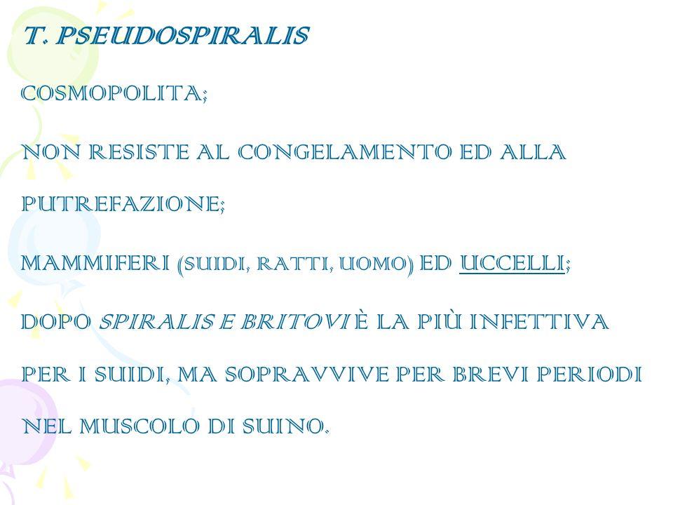 T. PSEUDOSPIRALIS COSMOPOLITA;