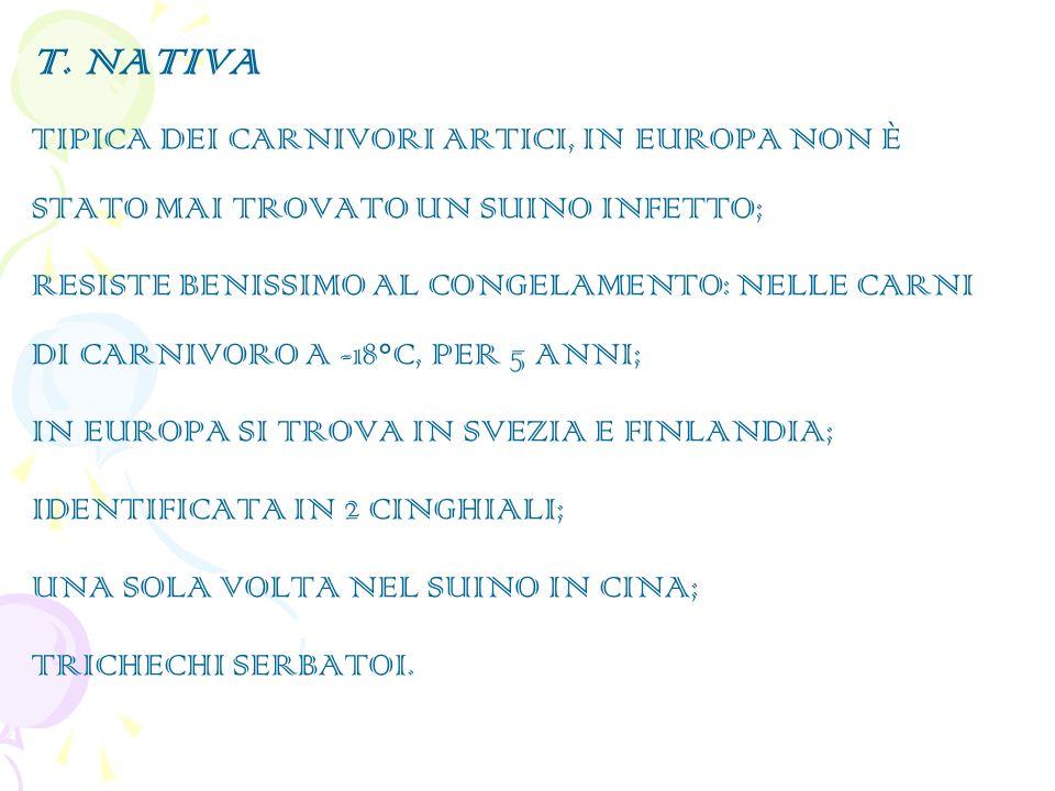 T. NATIVA TIPICA DEI CARNIVORI ARTICI, IN EUROPA NON È STATO MAI TROVATO UN SUINO INFETTO;