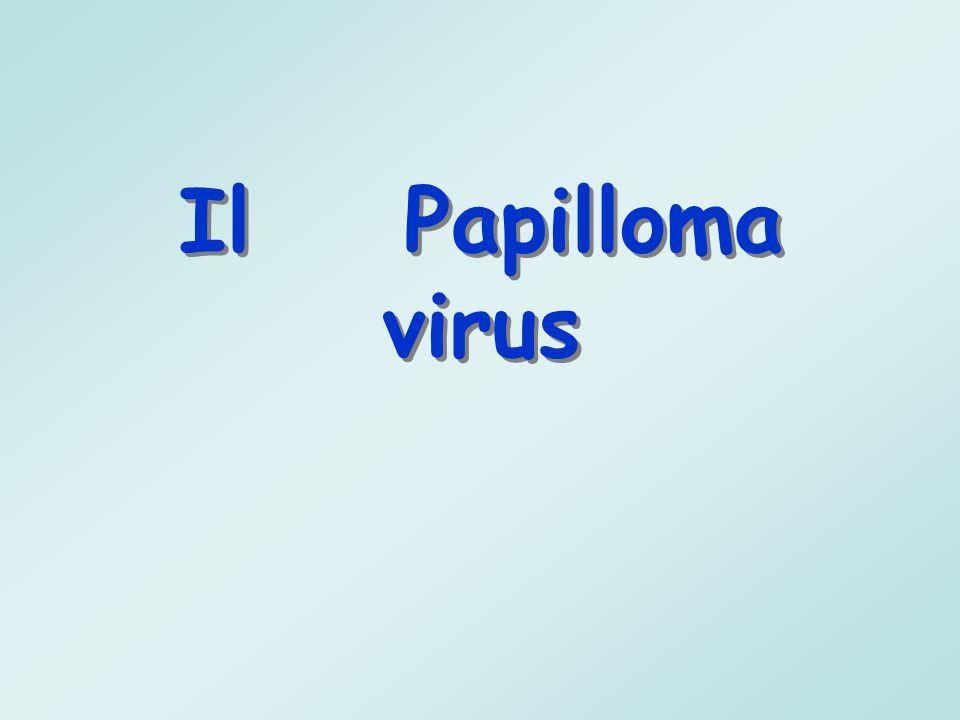 Il Papilloma virus