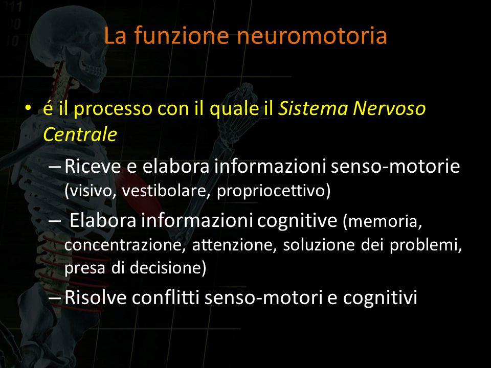 La funzione neuromotoria