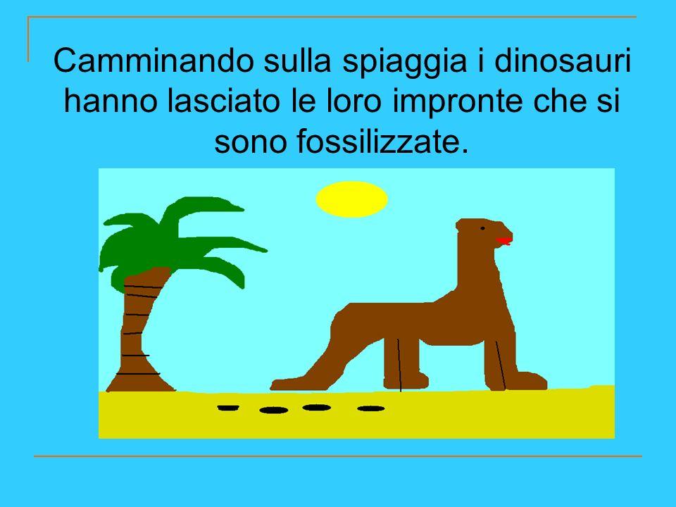 Camminando sulla spiaggia i dinosauri hanno lasciato le loro impronte che si sono fossilizzate.