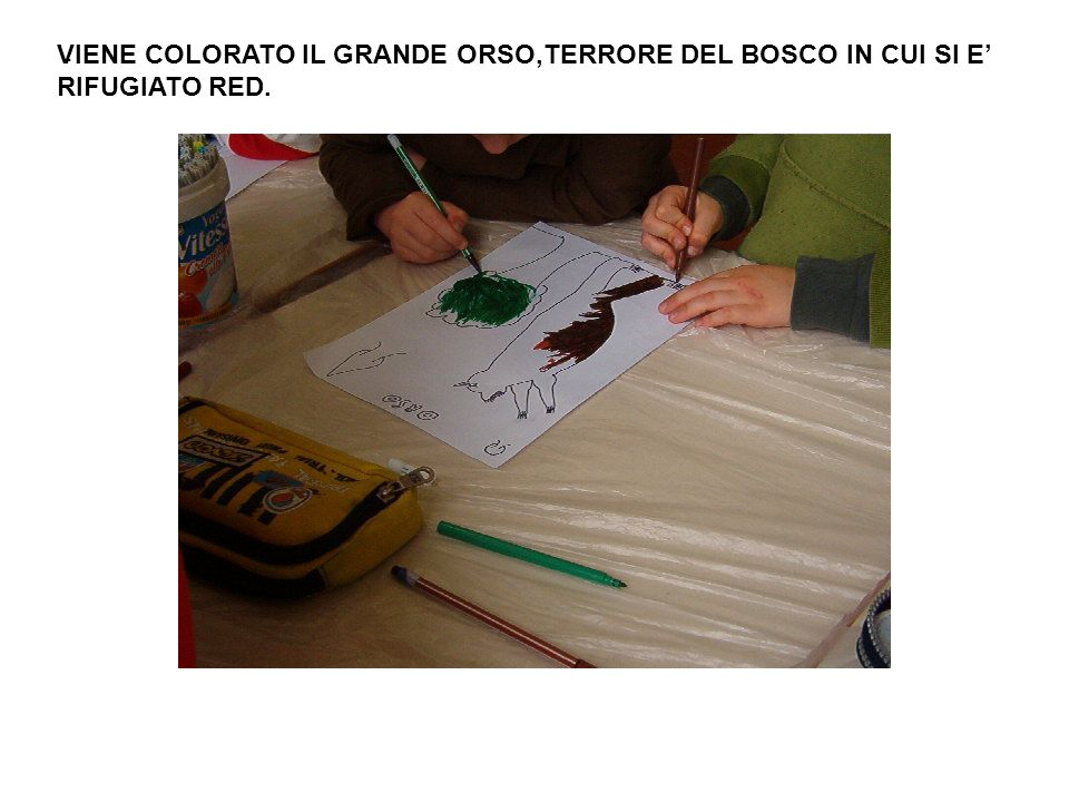 VIENE COLORATO IL GRANDE ORSO,TERRORE DEL BOSCO IN CUI SI E' RIFUGIATO RED.