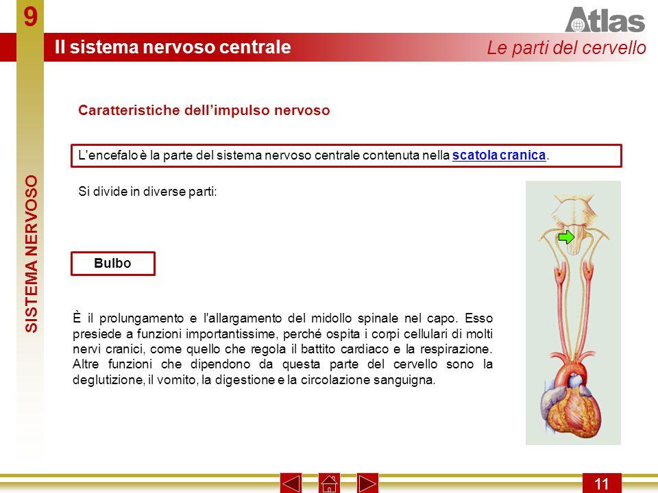 9 Il sistema nervoso centrale Le parti del cervello SISTEMA NERVOSO 11