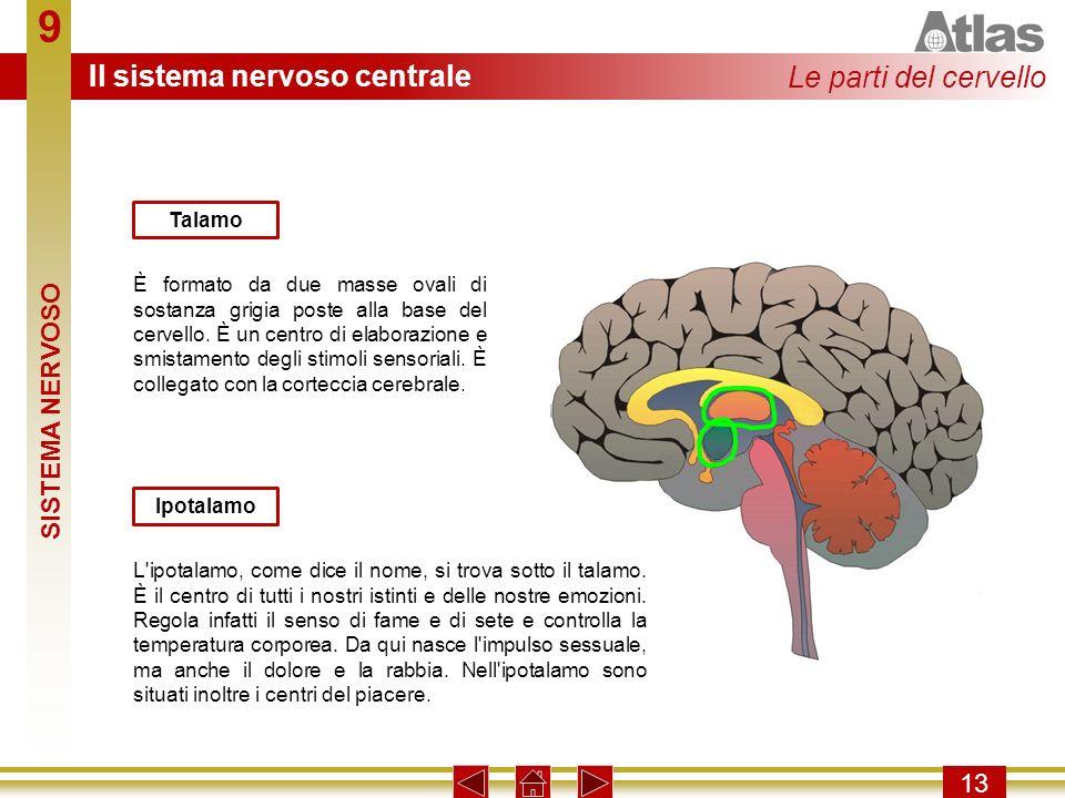 9 Il sistema nervoso centrale Le parti del cervello SISTEMA NERVOSO 13