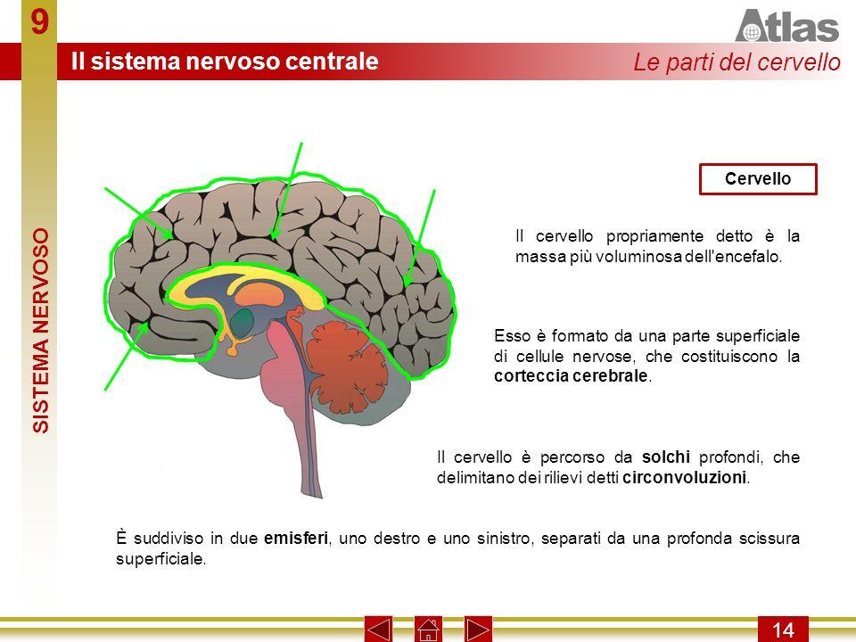 9 Il sistema nervoso centrale Le parti del cervello SISTEMA NERVOSO 14