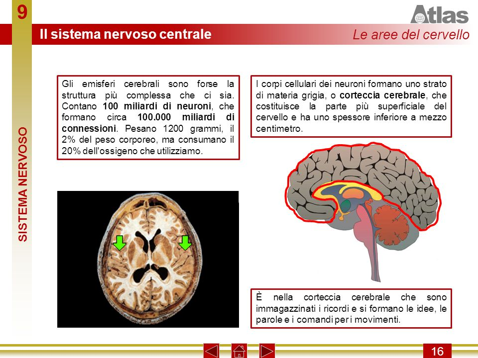 9 Il sistema nervoso centrale Le aree del cervello SISTEMA NERVOSO 16