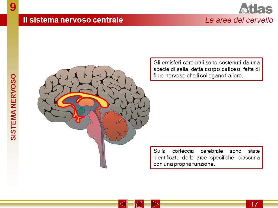 9 Il sistema nervoso centrale Le aree del cervello SISTEMA NERVOSO 17