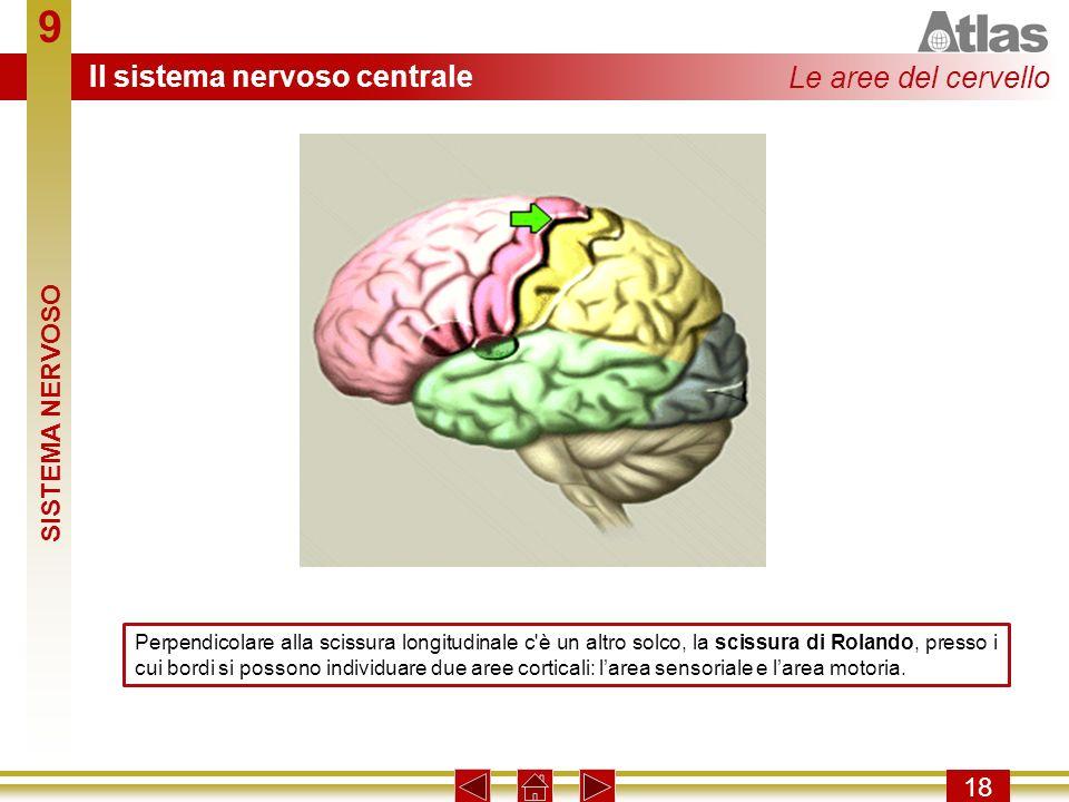 9 Il sistema nervoso centrale Le aree del cervello SISTEMA NERVOSO 18