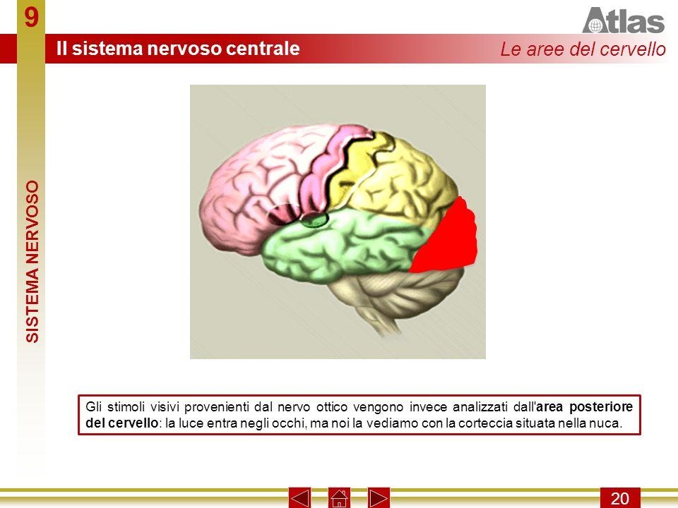 9 Il sistema nervoso centrale Le aree del cervello SISTEMA NERVOSO 20