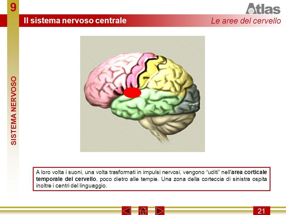 9 Il sistema nervoso centrale Le aree del cervello SISTEMA NERVOSO 21