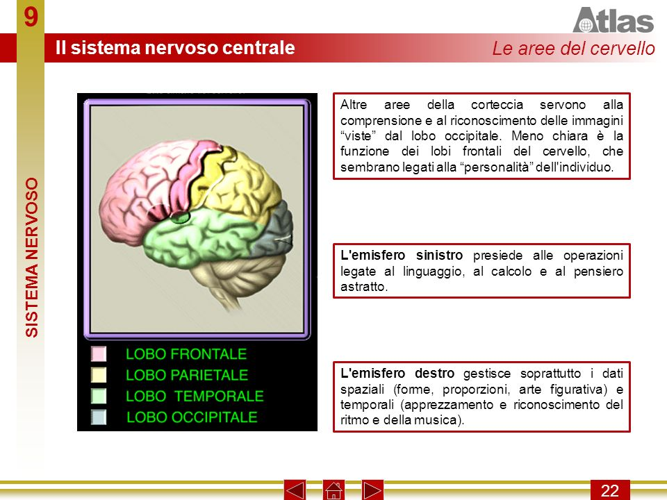 9 Il sistema nervoso centrale Le aree del cervello SISTEMA NERVOSO 22