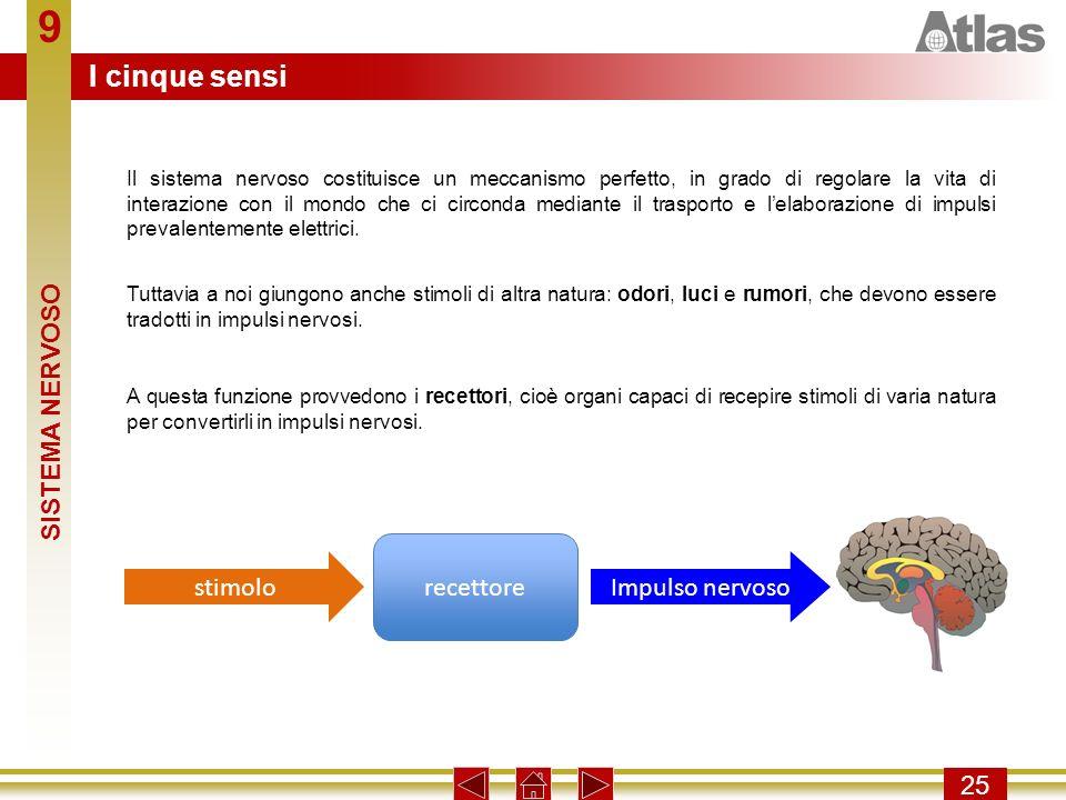 9 I cinque sensi SISTEMA NERVOSO recettore stimolo Impulso nervoso 25