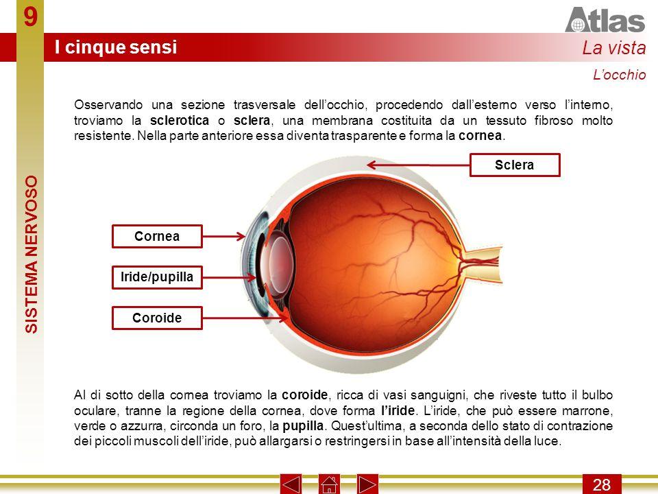 9 I cinque sensi La vista SISTEMA NERVOSO 28 L'occhio
