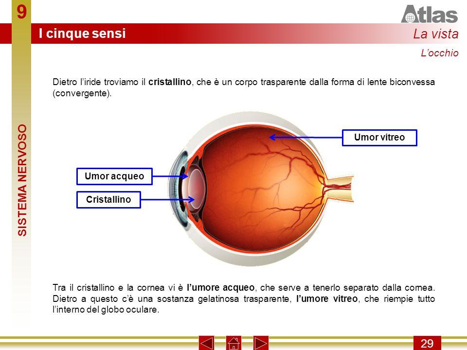 9 I cinque sensi La vista SISTEMA NERVOSO 29 L'occhio