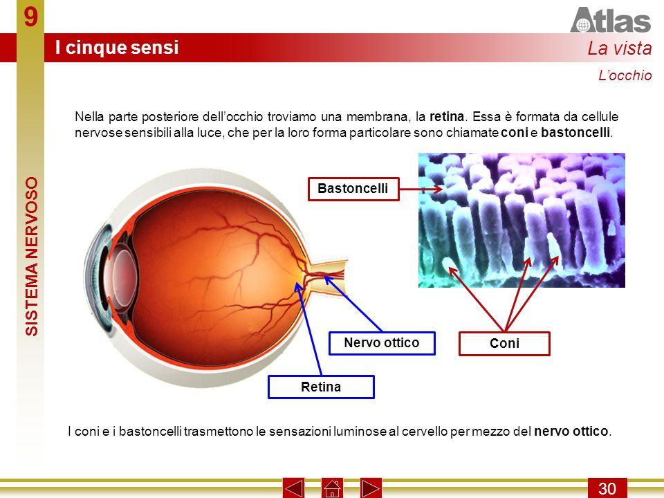 9 I cinque sensi La vista SISTEMA NERVOSO 30 L'occhio