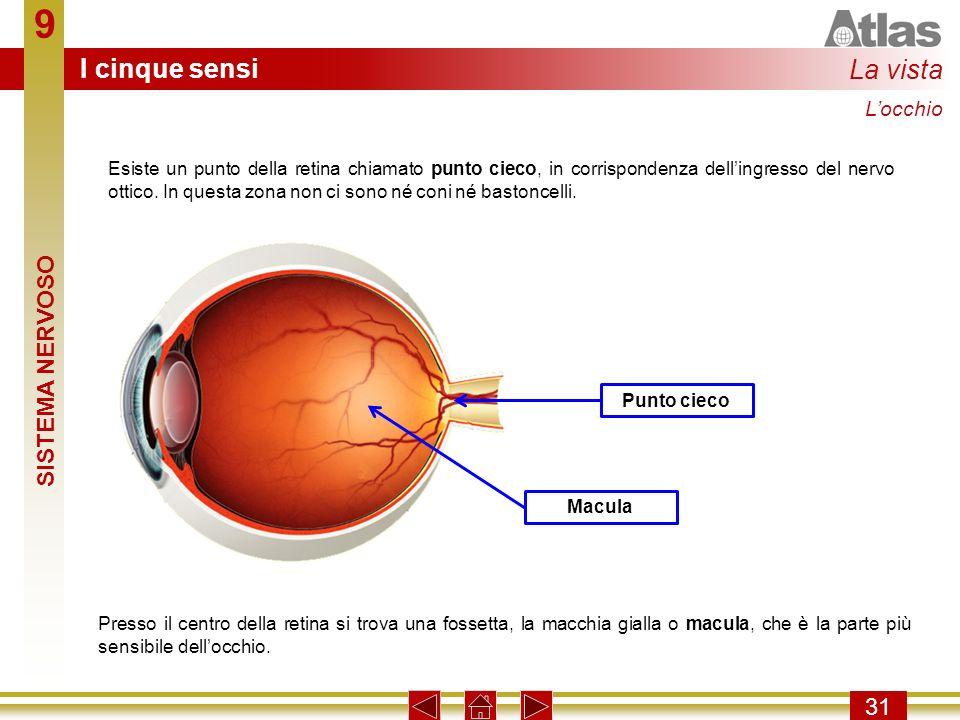 9 I cinque sensi La vista SISTEMA NERVOSO 31 L'occhio