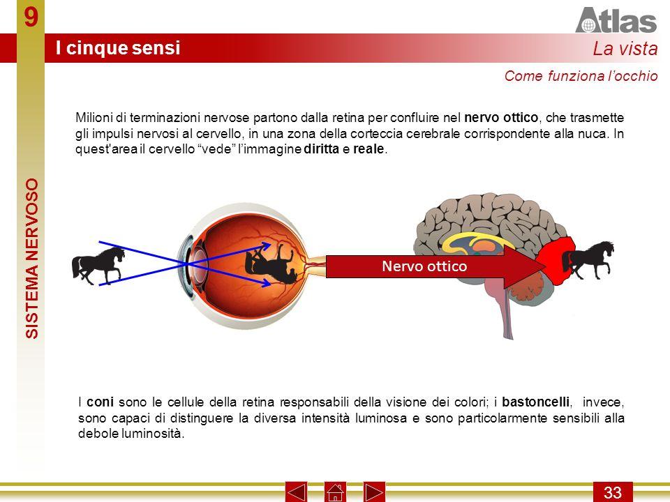 9 I cinque sensi La vista SISTEMA NERVOSO Nervo ottico 33
