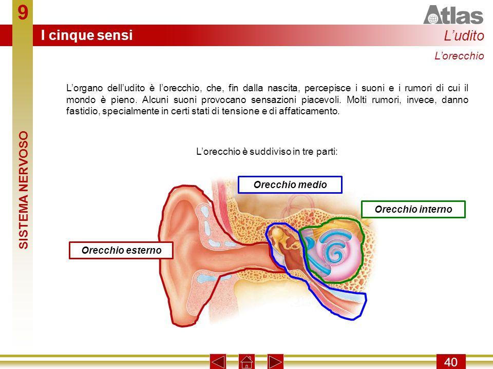 L'orecchio è suddiviso in tre parti: