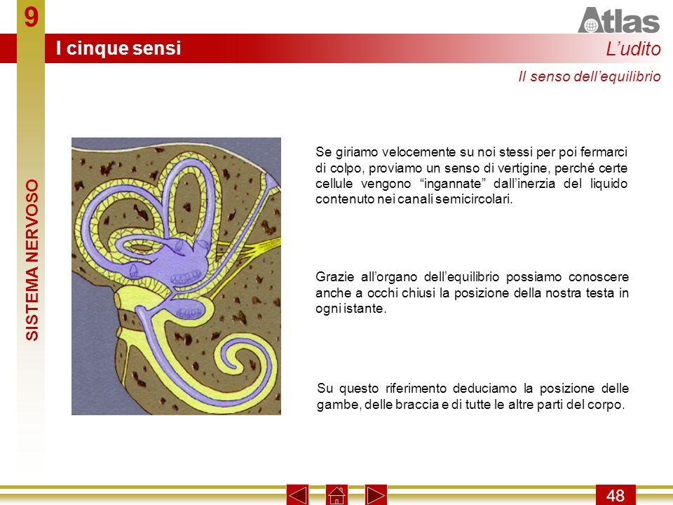 9 I cinque sensi L'udito SISTEMA NERVOSO 48 Il senso dell'equilibrio