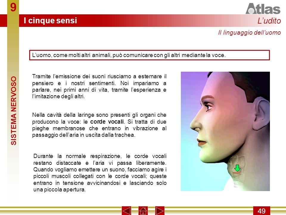 9 I cinque sensi L'udito SISTEMA NERVOSO 49 Il linguaggio dell'uomo
