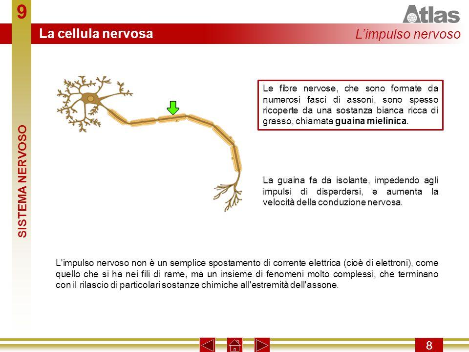 9 La cellula nervosa L'impulso nervoso SISTEMA NERVOSO 8