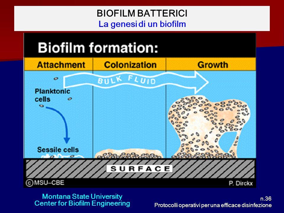 BIOFILM BATTERICI La genesi di un biofilm