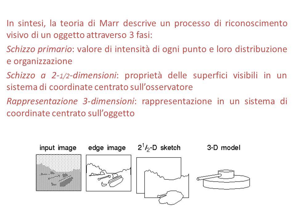 In sintesi, la teoria di Marr descrive un processo di riconoscimento visivo di un oggetto attraverso 3 fasi: Schizzo primario: valore di intensità di ogni punto e loro distribuzione e organizzazione Schizzo a 2-1/2-dimensioni: proprietà delle superfici visibili in un sistema di coordinate centrato sull'osservatore Rappresentazione 3-dimensioni: rappresentazione in un sistema di coordinate centrato sull'oggetto