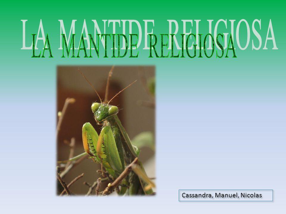 LA MANTIDE RELIGIOSA Cassandra, Manuel, Nicolas